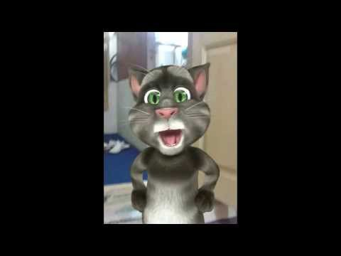 Talking cat sing Hindi song for romantic for Whatsapp App free download ios7 in IPhone