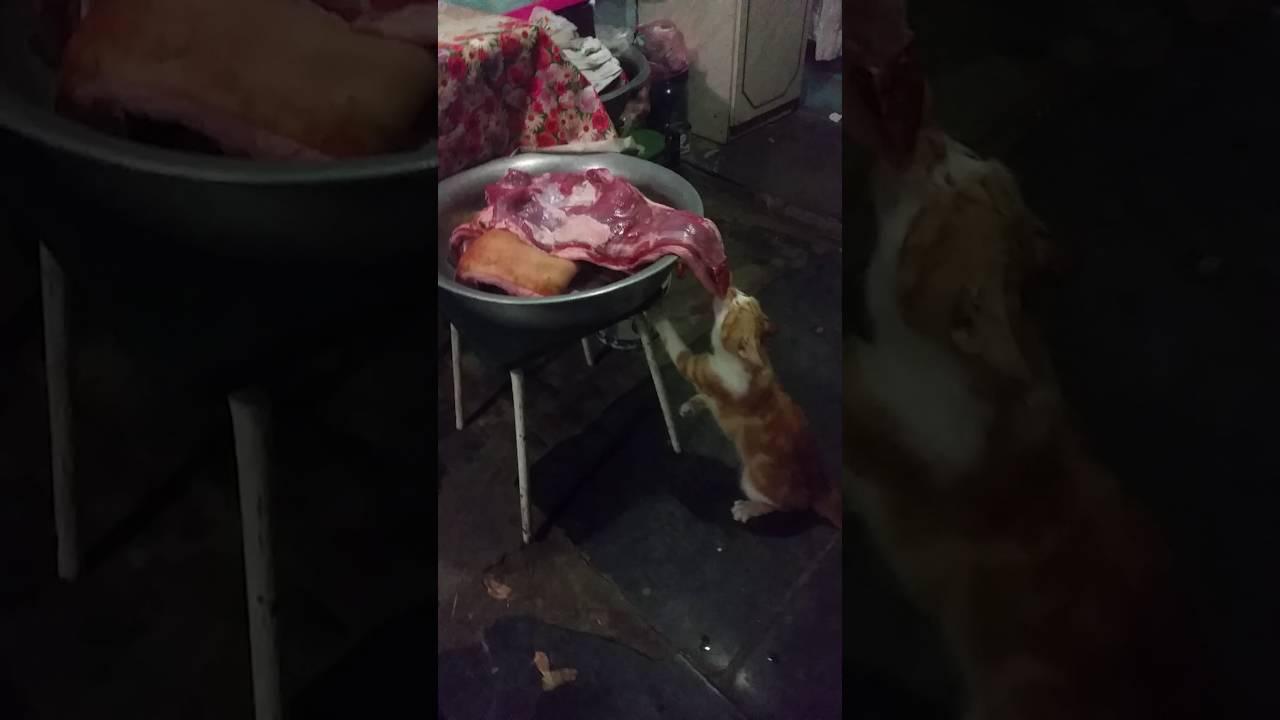 Коты любят мясо
