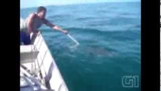 Baby Dolphin rescued and jumps to thank