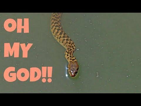 LOOK WHAT I SAW!   INDIAN WILDLIFE vlog   Turtles, snakes, marijuana etc   Wildly Indian
