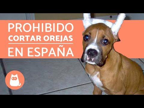 LEY DE ANIMALES DE COMPAÑÍA EN ESPAÑA 2018 - CONVENIO EUROPEO