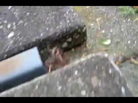 Vroege Vogels - Wesp vangt mot, spin is wesp te slim