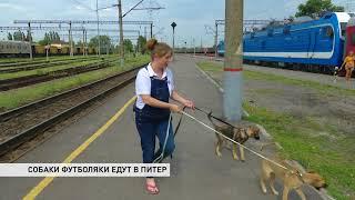 Двух бездомных собак из Ростова приютил петербуржец