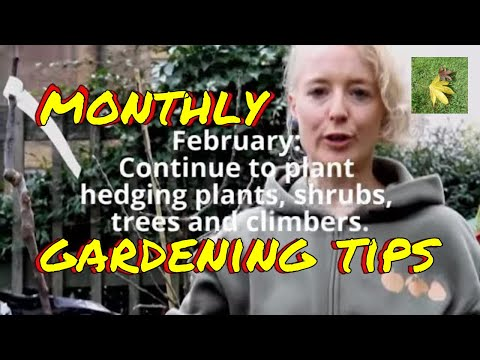 February Gardening Tips for trees shrubs hedges fruit trees & climbers uk