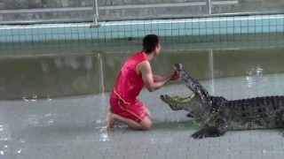 Крокодиловая ферма.Прикол на шоу с крокодилами.Тайланд