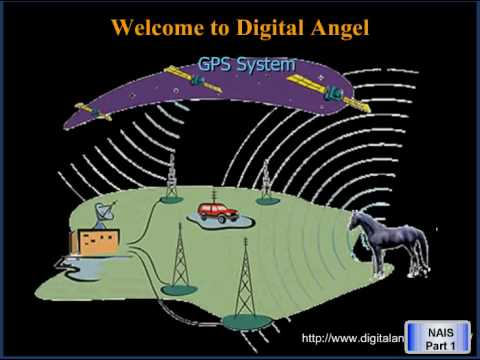 National Animal Identification System