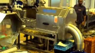 Salad Line Process -tecnoceam