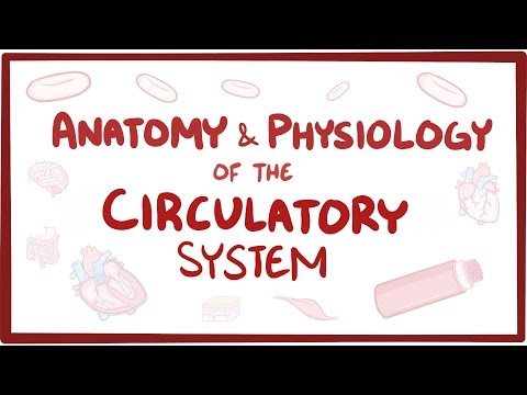 Anatomy & physiology of the circulatory system