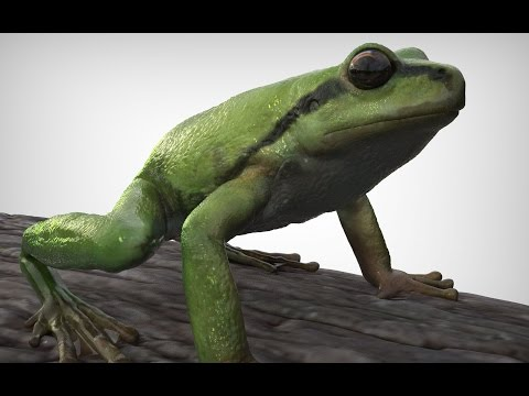 Pacific Tree Frog zbrush animation model