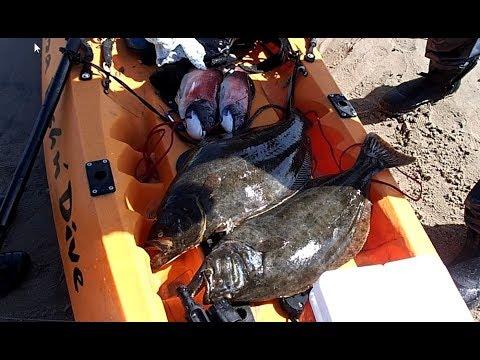 Kayak Fishing The Malibu Kelp Beds For Halibut And Sheepshead