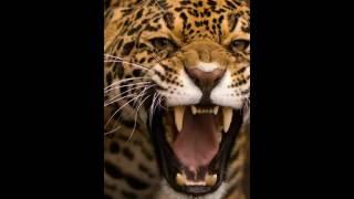 Глюк'оZа кошка это дикий зверь