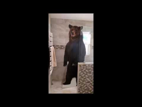 Amazon Prime Day Bear Attack