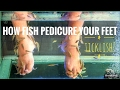 How fish pedicure (and tickle!) your feet