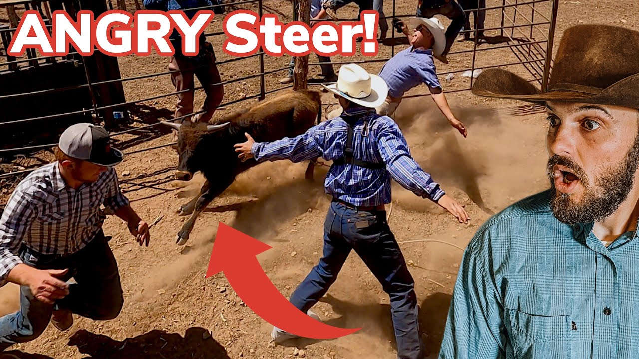 Roping a Lost Calf on Horses! [2/3]