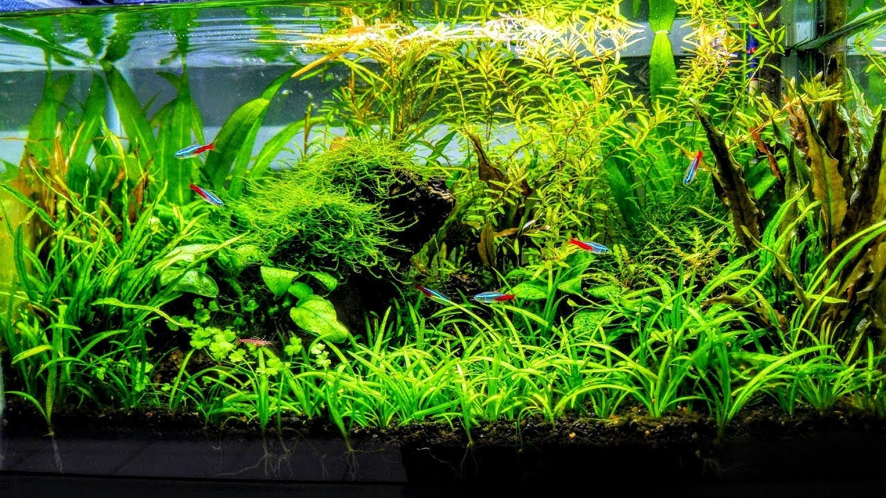 How to aquascape a low tech planted aquarium part 1 youtube for Plante aquarium