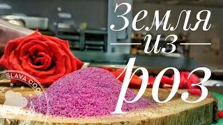 земля из роз slava cook