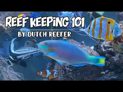 Reef Keeping 101   Scarus Quoyi Parrotfish Care Guide
