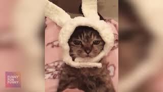 😁 Забавные 😻 Кошки и 🐶 Собаки - Потрясающее смешное видео о жизни домашних животных 😇