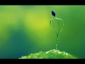 Are Plants Smart? Do Plants Have Feelings or Feel? | Plant Documentary | Green Plants & Nature