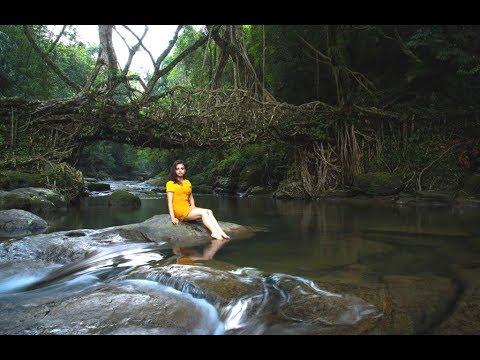 Living Root Bridges/Meghalaya Tourism/Travel Diaries