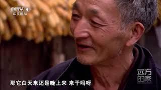 [远方的家]世界遗产在中国 宝兴县:探访大熊猫的发现地| CCTV中文国际