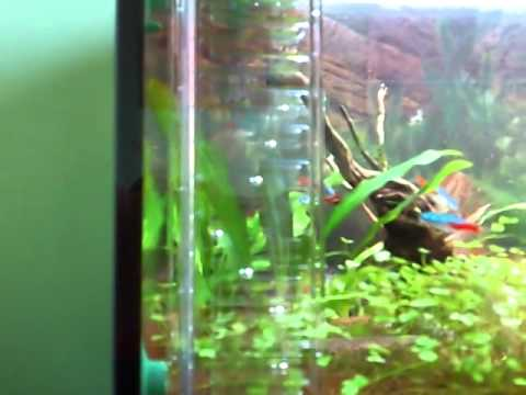 Dennerle CO2 mini Flipper