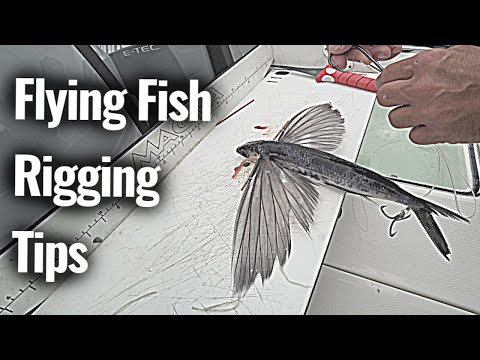 How To A Rig Flying Fish For BLUEFIN Tuna