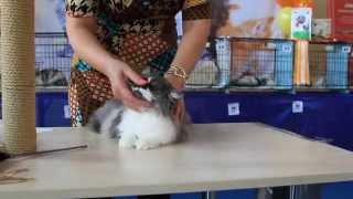 Международная выставка кошек ''Осенний Блюз''. Казахстан