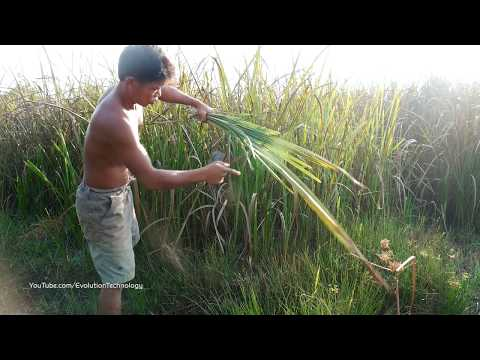 Primitive Technology, build shelter house on the ant-hill
