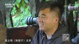 《远方的家》 20210405 云南铜壁关自然保护区 热带雨林里的动植物天堂| CCTV中文国际 - YouTube