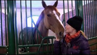 Stallet: Malin visar sina hästar - We Love Horses