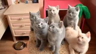 игривые классные котята