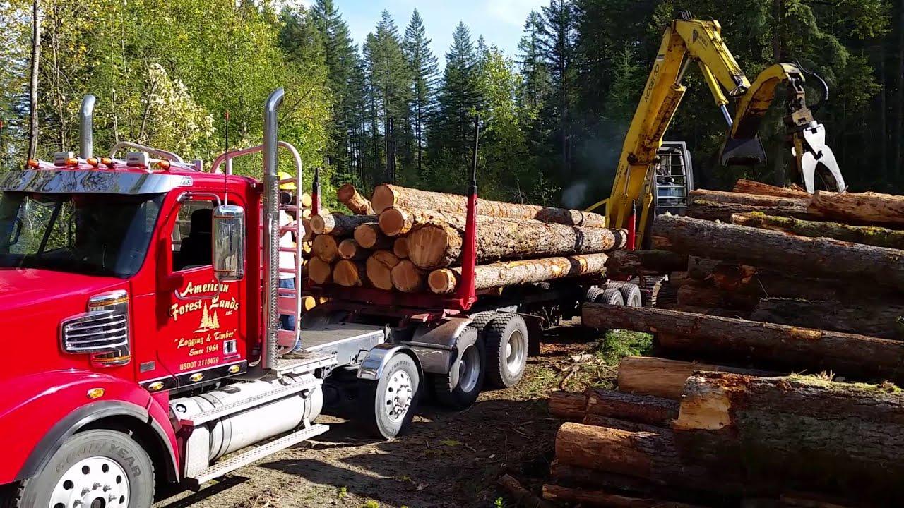 Logging Company Washington Timber Harvesting Trees