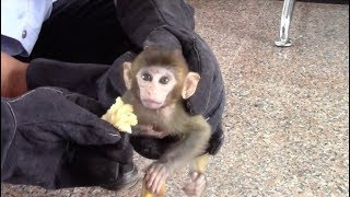 Police Rescue National Protected Monkey in Southwest China