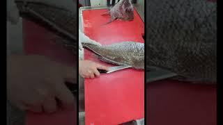 5kg 자연산 참돔 회…