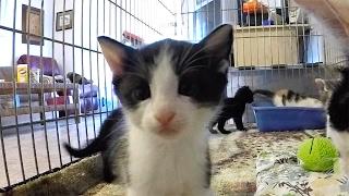 Foster Kitten Program Reaches 500th Kitten!