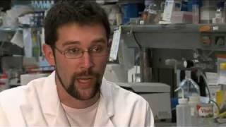 Buscando respuestas: ¿como se origina el tumor de páncreas?