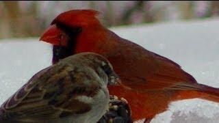 США птицы дикая природа