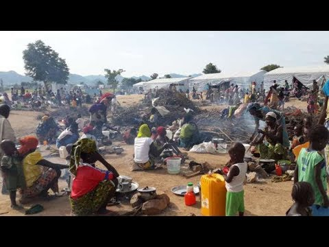 Breaking News! UNHCR alarmed by forceful return of Nigerian refugees from Cameroon!