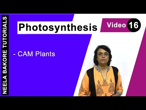 Photosynthesis - CAM Plants