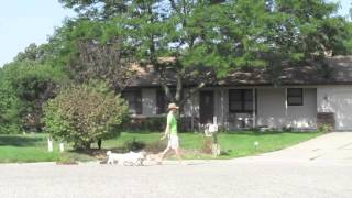 Walking A Pack Of Dogs | Follow The Leader Dog Training And Rehabilitation Llc