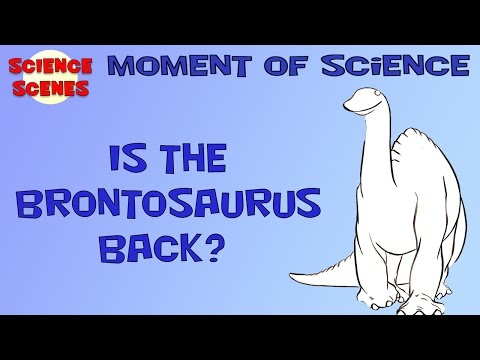 Moment of Science - Is the Brontosaurus Back?