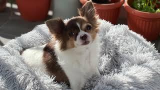 raffy francisco dogs reel