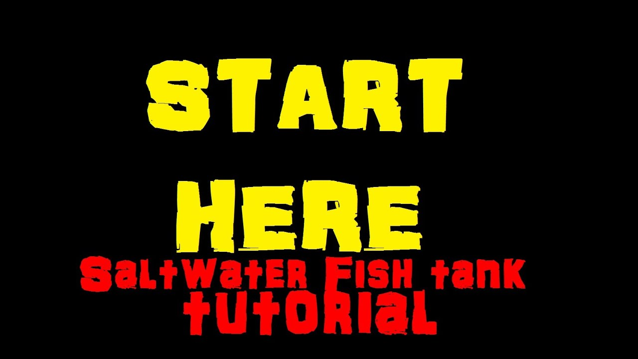 How to make a saltwater fish tank for beginners youtube for Starting a fish tank for beginners