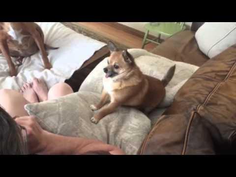Papi Pedro The New World S Cutest Dog Youtube