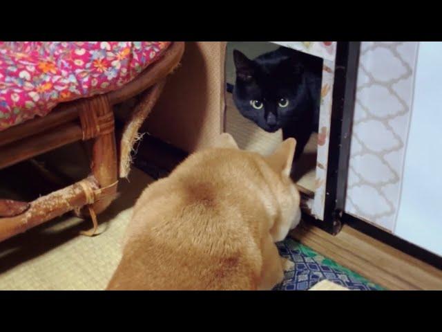 犬「ワン!」猫「何だ何だ⁈」Cat response to woof!