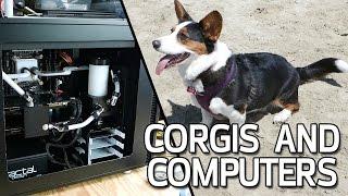 Corgis, Computers and Q&A - Paul's HardVlog #010