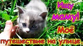 Путешествие котенка Морковки. Поиски мамы. (10.17г.) Семья Бровченко.