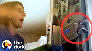 Terrified Mom Finds Snake Behind the Fridge | The Dodo