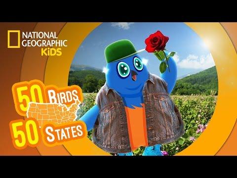 New York - Feat. Rapper MC Blue the Eastern Bluebird   50 BIRDS, 50 STATES